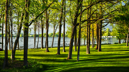 Stand of oak trees in lakeside park with lang shadows on green grass Kho ảnh
