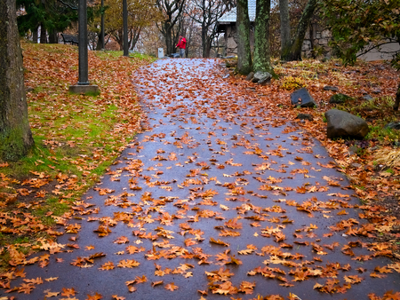 Footpath on hill covered with wet fallen autumn leaves is lined with trees displaying colorful fall foliage at Enger Park in Duluth, Minnesota.