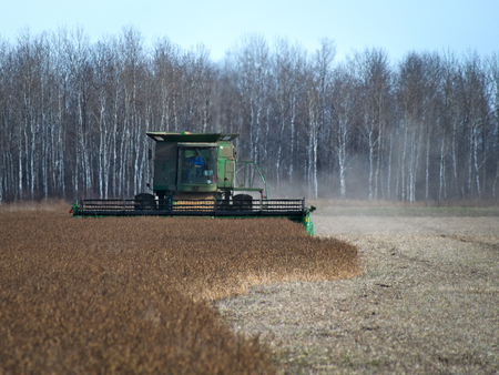 GRYGLA, MN - 02 NOV 2018: John Deere Combine harvesting field of soybeans for food and other products. Video footage available. Editöryel