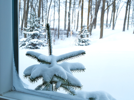 The view though frosty window during a cold day in Bemidji, Minnesota with snow covered pine tree and ground outside. Stok Fotoğraf
