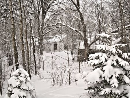 Snowy forest after new snowfall with covered trees in foreground and shacks in background.