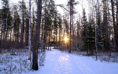 Remote forest trail through a pretty stand of pine trees, with the sun coming up in the background and causing shadows on the snow on a serene winter morning.