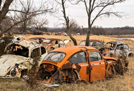OKEMAH, OK - 2 MAR 2020: Wrecked and rusty Volkswagon Beetle cars with missing parts and broken windows are parked in a field of a salvage junkyard, among trees and long grass.