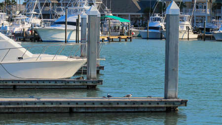 Beautiful yachts, water, and seagulls in the marina, with docks and concrete pillars. Фото со стока