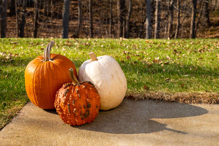 Three ripe Halloween pumpkins with stems are sitting on a concrete sidewalk with green grass, trees and brush in the background on a sunny afternoon.