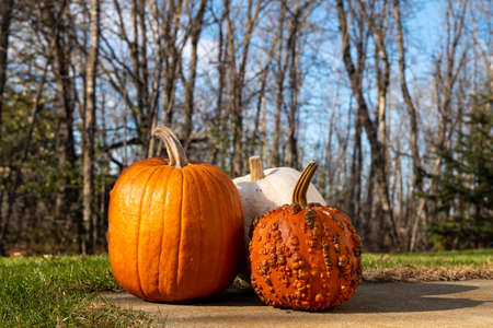 Three ripe Halloween pumpkins with stems are sitting on a sidewalk with green grass, trees and blue sky in the background on a sunny day.