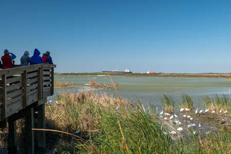 PORT ARANSAS, TX - 13 FEB 2020: Photographers and ornithologists looking at birds in wetland at the Port Aransas Nature Preserve, known by bird watchers for its birdlife, with a ship in the distance.