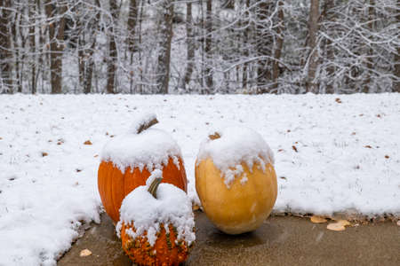 Snow on three Pumpkins on a sidewalk on a cloudy late autumn day in Minnesota. 스톡 콘텐츠