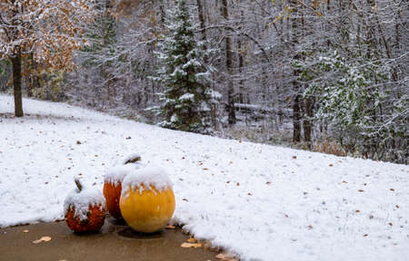 Snow on Pumpkins on a cloudy late autumn day.