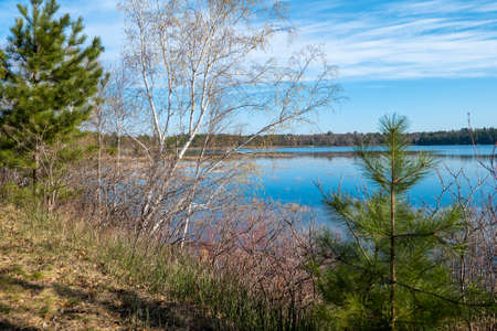 Birch and pine trees along the shore of a beautiful Minnesota lake. 스톡 콘텐츠