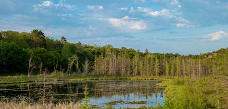 Beautiful nature wilderness spring scene in northern Minnesota. This is a large tree lined pond with early lily pads in evening light, and partly cloudy blue sky reflected in the calm water.