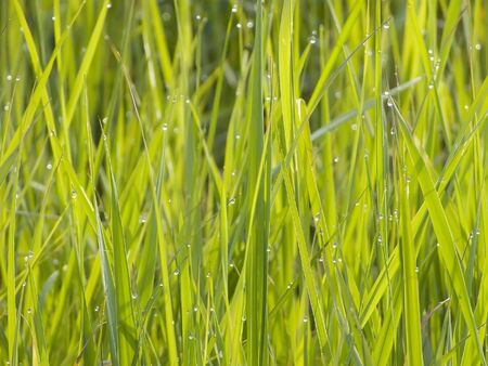 neighbour: Garden. Grass of neighbour neighbor is always more green Stock Photo