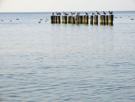 pales: Sea. Sea-gulls sit very preferably on breakwaters. Breakwaters protect beaches in front of waves