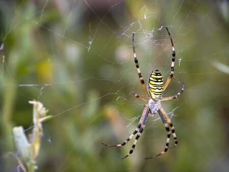 arthropoda: All spiders are hunters, they eat onto different insects