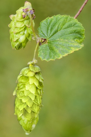 Hop - one photo