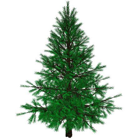 firs: Bare Christmas tree