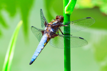 Macro view of dragonfly sitting on green plant stem photo