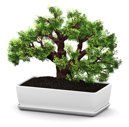 3D render illustration of green miniature bonsai Baobab tree in domestic ceramic flower pot isolated on white background Stock Photo