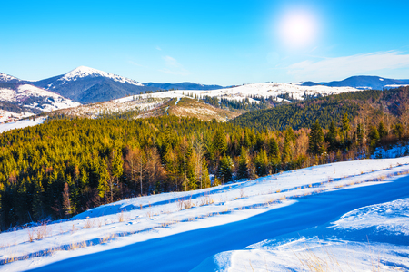 european: Scenic winter panorama of Carpathian Mountains with snowy peaks, extreme terrain slopes and pine tree wood forest in Ukraine