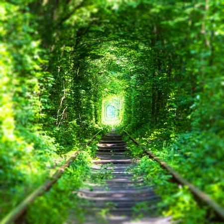 """유명한 """"터널의 사랑""""랜드 마크 Klevan, Rivno 지역, 우크라이나 - 녹색 나무와 잔디와 깊은 숲에서 철도 트랙"""