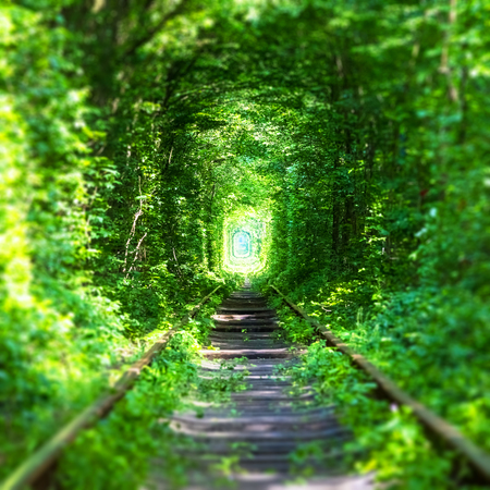 voyage: Famous Tunnel of Love landmark in Klevan, Rivno Region, Ukraine - railway track in a deep forest with green trees and grass