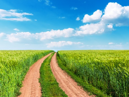 Scenic summer landscape background view of green rural cultivated wheat farm field, winding road and blue sunny sky with clouds