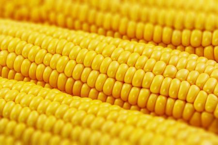 Macro view of fresh yellow sweet corn or maize