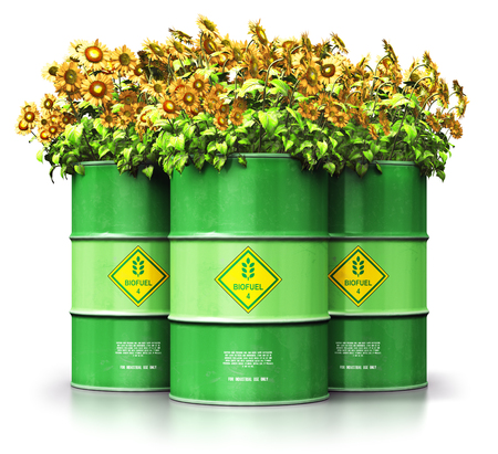 Creative abstract ecology, alternative sustainable energy and environment protection saving business concept: 3D render illustration of the group of green metal biofuel drums or biodiesel barrels with yellow sunflowers flowers isolated on white background with reflection effect