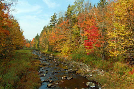 Trees along a stream changing color during fall foliage season in Vermont. photo