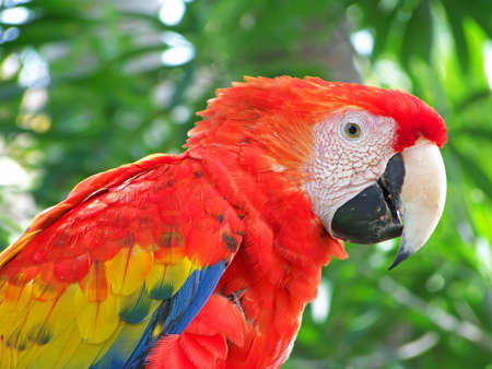 Parrot keeping a close eye on you. photo