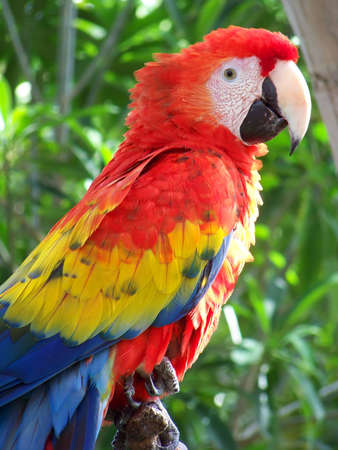Parrot resting while keeping a watchful eye. photo