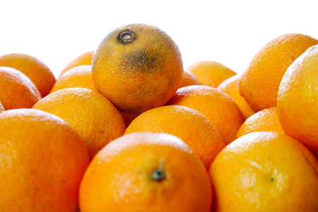 Stack of clementines isolated on white - One rotten on the top