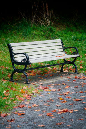 Park bench surrounded by fallen leaves