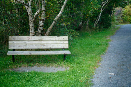 walking trail: Panchina accanto a un percorso a piedi