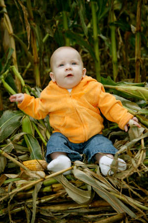 A cute little baby girl poses next to corn stalks