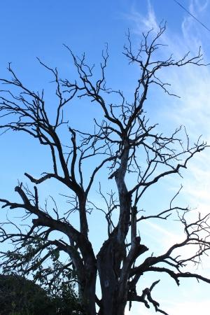 arbre mort: Arbre mort et ciel bleu
