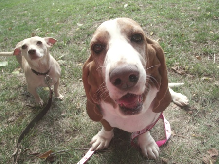 Dogs name, Rush and Cupcake photo