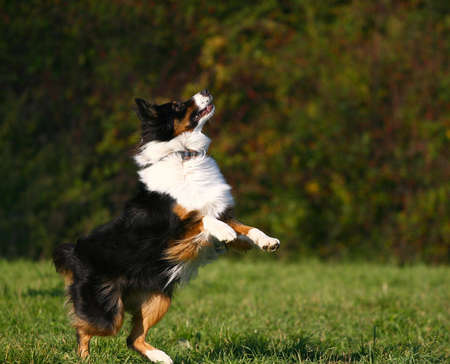 spiel: jumping dog