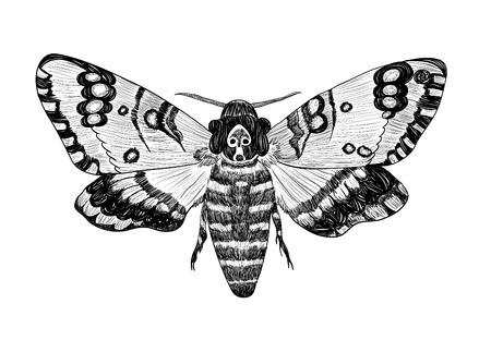 moth: Deaths-head moth on a white background.  Illustration