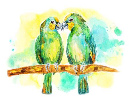 loros verdes: Dos loros verdes. Lovebirds que se sientan en una rama. Ilustraci�n de la acuarela en el fondo blanco