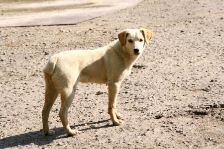 stray dog: Homeless sad dog, not purebred Stock Photo