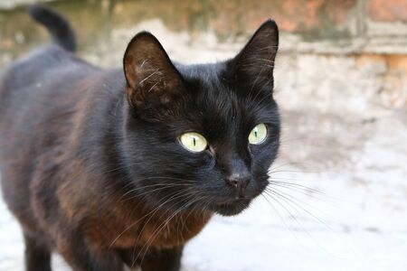 Black homeless cat with green eyes outdoors photo