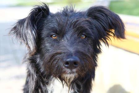 Black sad homeless dog with wet muzzle photo