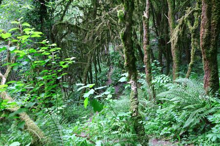 Moss on trees and ferns in mountains of Abkhazia