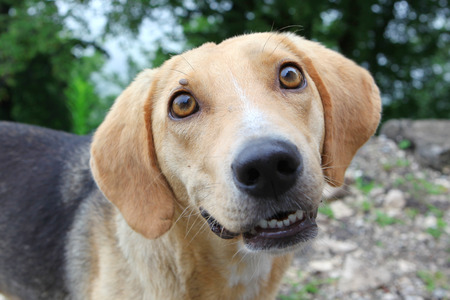 Hungry homeless dog looking in your eyes