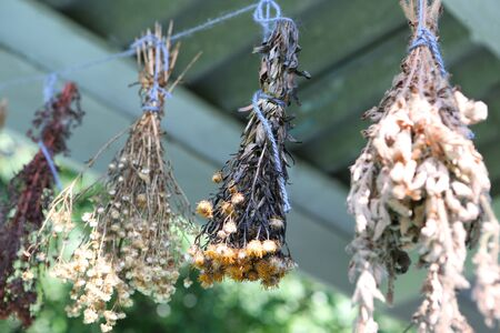 dried: Dried herbs hanging on a rope in village Stock Photo