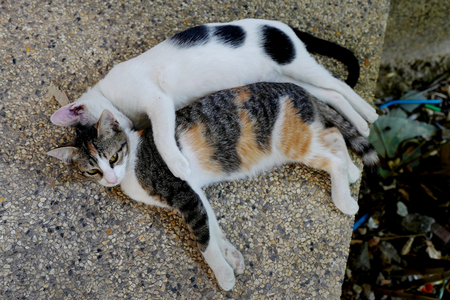 Two cats lie in embraces on a stone floor