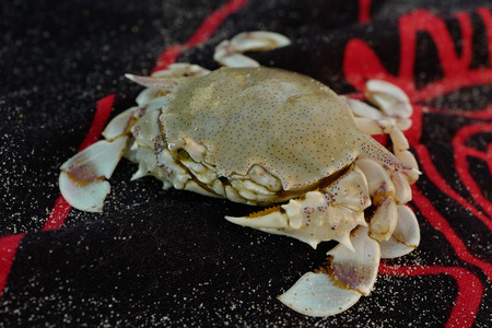Small crab sittind on cloth with sand Stock Photo