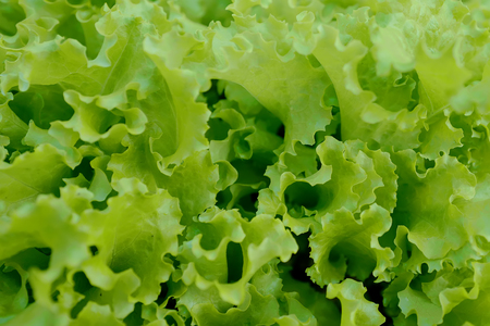 Background with leaves of a fresh green salad