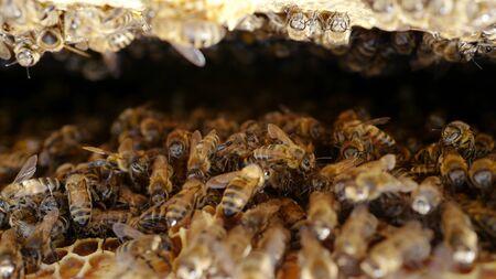 Bees in a beehive build honeycombs with honey Banco de Imagens